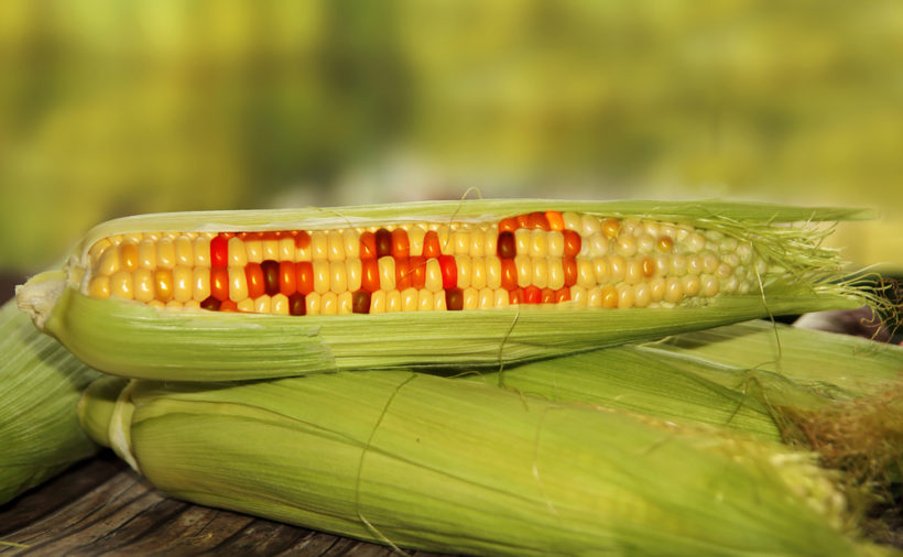 People know little about GMOs but want food labeled